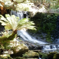 17/12/2015 - Mount Field National Park (Tasmanie0