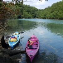19/03/2105 - Kayak dans la mangrove - Péninsule d'Osa