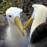 08/06/2016 - Galápagos