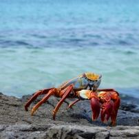 09/06/2016 - Galápagos